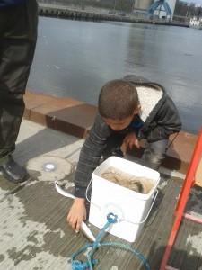 Der var hjælper på til at samle fisk